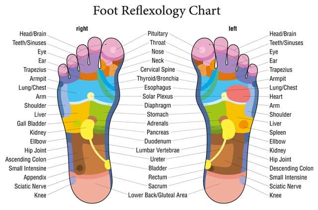 Reflexologia piciorului - diagrama